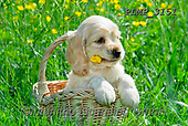 Marek, ANIMALS, REALISTISCHE TIERE, ANIMALES REALISTICOS, dogs, photos+++++,PLMP3151,#a#, EVERYDAY