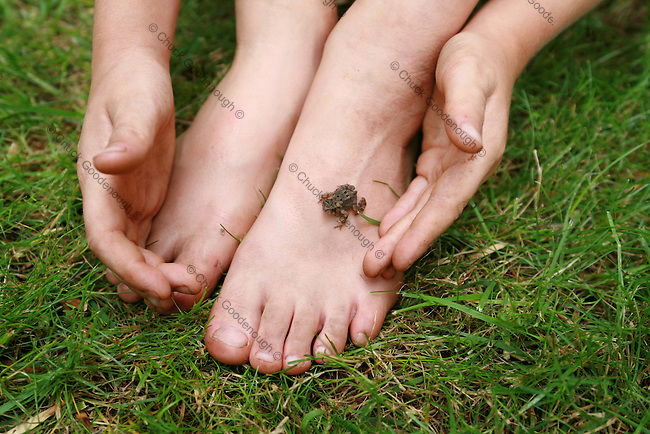 Photo of a Boy collecting a Baby Toad Perched on   his Dirty Feet in the Grass..