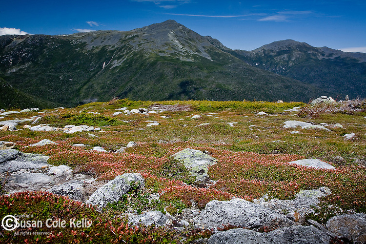 Alpine Gardens on Mount Washington, in the White Mountain National Forest, NH, USA