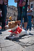Un cane con la bandiera rossa della FIOM durante lo Sciopero Nazionale della CGIL, in Abruzzo il corteo della protesta si è svolta nella zona rossa della città de L'Aquila ad un anno dal terremoto. 25/06/2010 Photo: Adamo Di Loreto/BuenaVista*Photo
