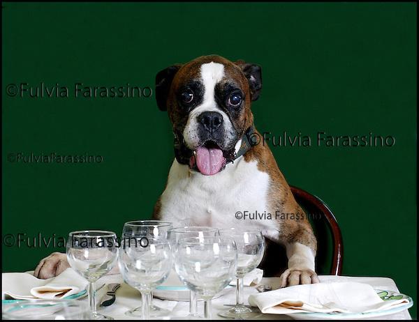Cane a tavola ,Dog with table set..