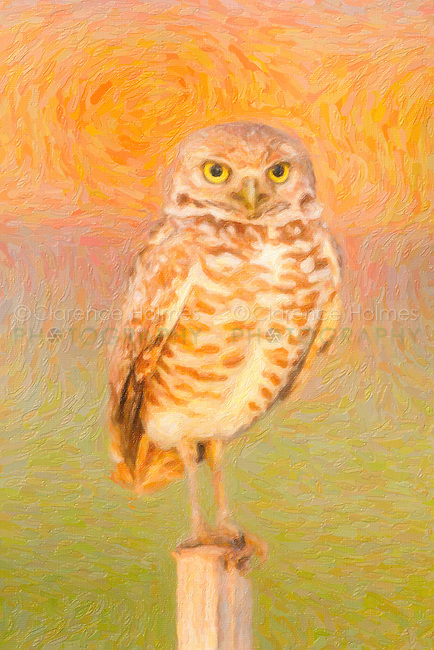 A Burrowing owl standing on a T-perch. The image was creatively modified to resemble a painting.