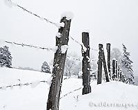 Snow on Fenceposts
