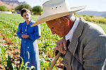 """June 16, 2008 -- COLORADO CITY, AZ: JOSEPH JESSOP, 86 years old, leans against his hoe while weeding a corn field in Colorado City, AZ. Jessop, a polygamist and member of the FLDS, was arrested during the Short Creek Raid in 1953 and had his wives and children taken from him for two years. Colorado City and neighboring town of Hildale, UT, are home to the Fundamentalist Church of Jesus Christ of Latter Day Saints (FLDS) which split from the mainstream Church of Jesus Christ of Latter Day Saints (Mormons) after the Mormons banned plural marriage (polygamy) in 1890 so that Utah could gain statehood into the United States. The FLDS Prophet (leader), Warren Jeffs, has been convicted in Utah of """"rape as an accomplice"""" for arranging the marriage of teenage girl to her cousin and is currently on trial for similar, those less serious, charges in Arizona. After Texas child protection authorities raided the Yearning for Zion Ranch, (the FLDS compound in Eldorado, TX) many members of the FLDS community in Colorado City/Hildale fear either Arizona or Utah authorities could raid their homes, in the same way. Older members of the community still remember the Short Creek Raid of 1953 when Arizona authorities using National Guard troops, raided the community arresting the men and placing women and children in """"protective"""" custody. After two years in foster care, the women and children returned to their homes. After the raid, the FLDS Church eliminated any connection to the """"Short Creek raid"""" by renaming their town Colorado City in Arizona and Hildale in Utah.   Photo by Jack Kurtz"""
