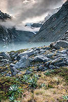 Dawn at Ice Lake with garden of alpine plants on its shores, Westland National Park, West Coast, New Zealand