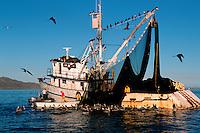 Sardine fishing, Magdalena Bay, Baja California, Pacific Ocean