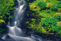 Pansy Creek<br />