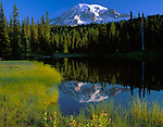 Mt. Rainier National Park, WA     <br /> Morning light on Mt. Rainier with reflection on a grassy pool of Reflection Lake