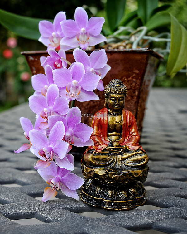 A peaceful moment just sitting and enjoying another year and another beautiful bloom. Purple Orchid and Buddha Statue. July 2, 2017. ©Fitzroy Barrett