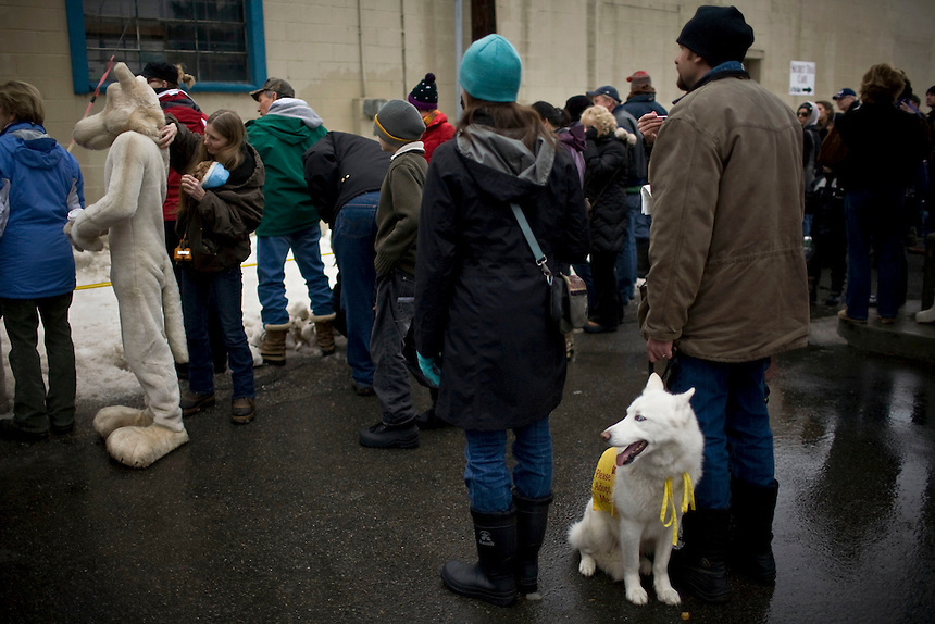 A Panhandle Aniimal Shelter doggy awaits his turn to compete in the doggy keg pull behind Eichardt's Pub in Sandpoint, Idaho during the 2011 Winter Carnival.