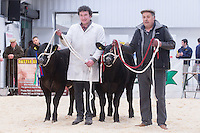 North Wales Show Potential sale at Ruthin Farmers auction Company,Ruthin,North Wales <br /> Picture Tim Scrivener 07850 303986<br /> &hellip;.covering agriculture in the UK&hellip;.
