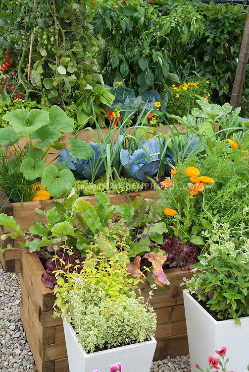 Thymes in pots, herbs, calendula, chives, zucchini, carrots, growing in herb and vegetable garden with flowers, cabbage, in raised beds
