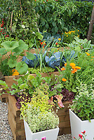 Thymes in pots herbs calendula chives zucchini carrots growing in