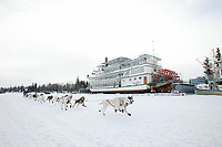 Dog Musher races by the sternwheeler Riverboat Discovery just after the start of the 1000 mile 2003 Iditarod sled dog race from Fairbanks to Nome, Alaska . Lack of snow along the normal trail route further south forced the relocation of the restart on the Chena River in Fairbanks.