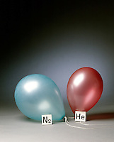 HELIUM &amp; NITROGEN FILLED BALLOONS (4 of 5)<br /> The two Balloons After 24 Hours<br /> After 24 hours the helium filled balloon is smaller than the nitrogen filled balloon. Helium effuses out of the balloon faster than nitrogen.  Light atoms or molecules effuse through the pores of the balloons faster than heavy atoms or molecules.