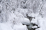 Snow build up in Squaw Creek during the snowstorms of January, 2017, which saw some of the largest snow deposits in Lake Tahoe area history.