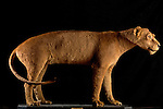 The Barbary or Atlas Lion (Panthera leo leo) is extinct in the wild, although some live in zoos around the world.