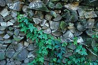Holzstapel als Lebensraum für Tiere, Versteckmöglichkeit, Unterschlupf, Stack of wood as a habitat for animals, hiding place, shelter