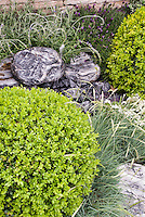 Boxwood globes, Festuca ornamental grass, rocks, stone wall. Spanish lavender, Lavandula stoechas, Design by Geoff Whiten
