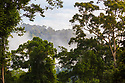 Lowland dipterocarp rainforest at dawn, Danum Valley, Sabah, Borneo. June.