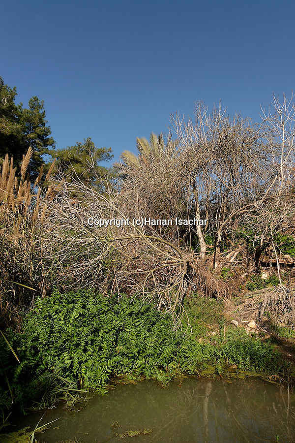 Israel, Keini stream in Menashe Heights