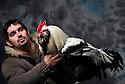 23/11/12 - MONTLUCON - ALLIER - FRANCE - Concours National Avicole de Montlucon. GR Coq Faverolle Francaise presente par Pierre Altemir. Eleveur Philippe Chantepie - Photo Jerome CHABANNE
