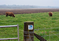 RSPB sign on a gate post with Highland cattle grazing in the background, Kinnordy Nature Reserve, Kingoldrum, Angus, Scotland.