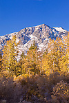 A photo of autumn leaves in front of a snowy Mount Tallac near lake Tahoe in California