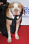 Hercules Rossi at The Humane Society of The United States celebration of The 25th Anniversary Genesis Awards in Beverly Hills, California on March 19,2011                                                                               © 2010 Hollywood Press Agency