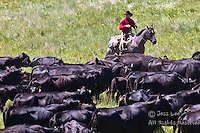 Photos and Pictures of Cowboys riding roping ranching rounding up cattle Cowboys working and playing. Cowboy Cowboy Photo Cowboy, Cowboy and Cowgirl photographs of western ranches working with horses and cattle by western cowboy photographer Jess Lee. Photographing ranches big and small in Wyoming,Montana,Idaho,Oregon,Colorado,Nevada,Arizona,Utah,New Mexico.