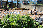 Men drying fish at the coast near Galle, Sri Lanka, Asia