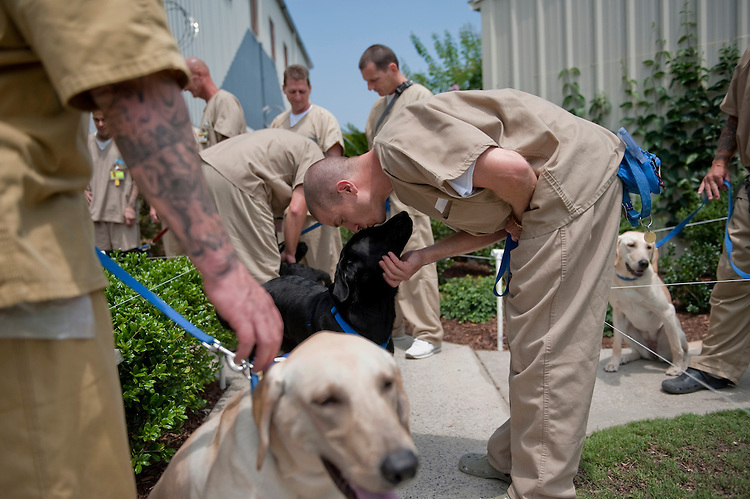 "UNITED STATES - JUNE 30: Inmates prepare to head back to their cells after training the dogs for the day. Training the dogs is akin to a full time job for the men, with a fixed schedule and routine happening everyday. The men must care for, exercise and feed the dogs - giving them a sense of responsibility for living creatures, or as the many of them noted, ""as if they were our kids."" (Photo By Chris Maddaloni/CQ Roll Call)"