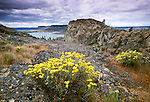 Basalt formations and flora, Columbia River Basin, Steamboat Rock State Park, Washington
