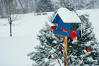 Find the birds-- Two male Northern cardinals in snow storm eating from bird feeder and some others waiting in line...can you see them?