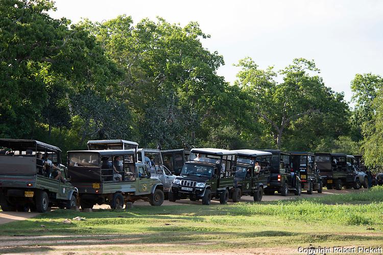 Tourist trucks in line waiting to see Leopard, Yala National Park, Sri Lanka