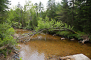 East Branch & Lincoln Railroad - Location of where a wooden trestle once crossed Anderson Brook along the old railroad in the area of Stillwater Junction in the Pemigewasset Wilderness of Lincoln, New Hampshire USA. This section of railroad traveled to Camp 21. This was a logging railroad which operated from 1893 - 1948.