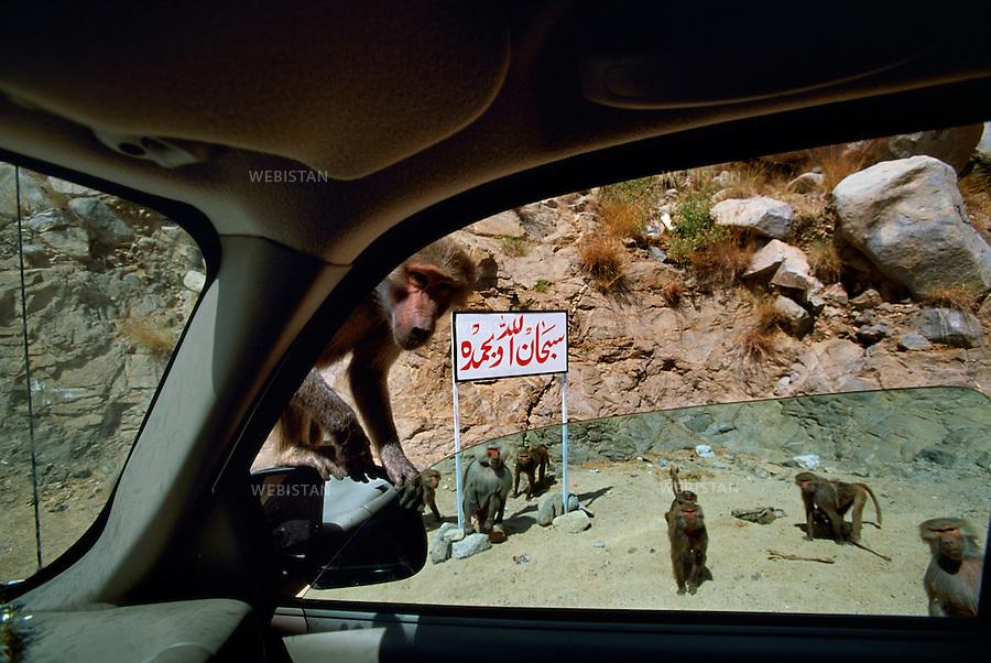 2003. Baboons climb on cars. Des babouins grimpent sur des voitures.