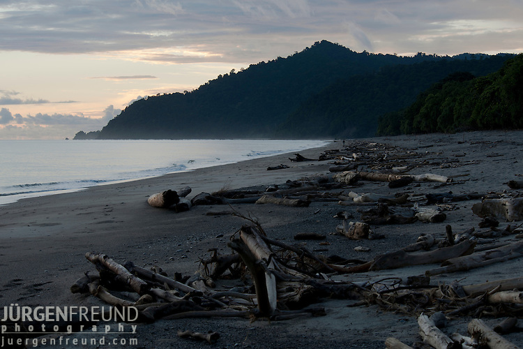 Patrolling this leatherback turtle nesting beach takes the whole night until sunrise by WWF staff.