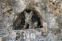 While exploring the Mani Peninsula and its many Byzantine churches, I found this cat in an open cubbyhole above the small church's doorway.