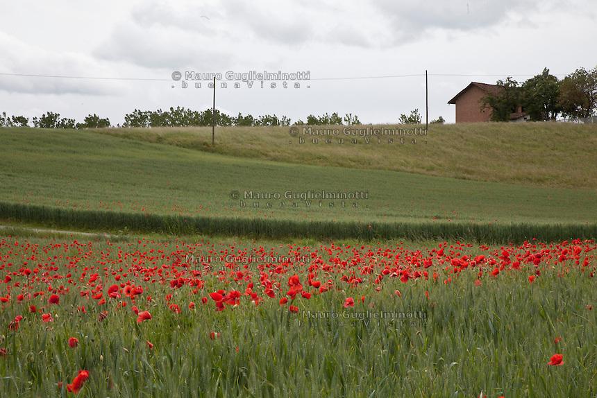 Paesaggio campagna astigiana con papaveri rossi