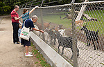 People feeding goats in small urban park, Maastricht, Limburg province, Netherlands,