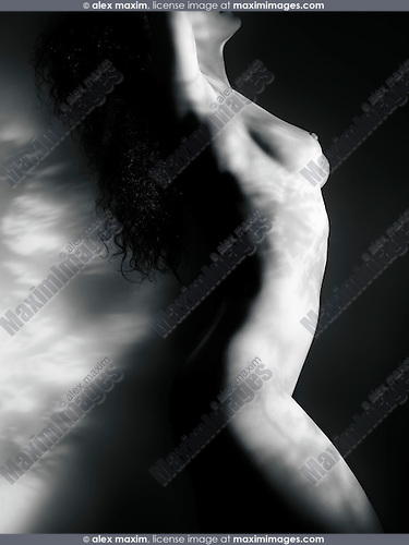 Fine art nude photo of a beautiful naked woman body with a light pattern of leaves on it, with dramatic shadows on black background
