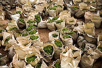 Bags filled with algae wait to be removed from the Number 6 Bathing Beach on Qingdao Bay in Qingdao, Shandong, China.  The bay is covered in a large algal bloom.  ..Qingdao is the host of the sailing events for the 2008 Summer Olympics. Algae blooms like this have become common in inland lakes in China, often caused by high pollution in bodies of water.  The city is asking for help and forcing residents to take part in the cleanup effort before the Olympic events..