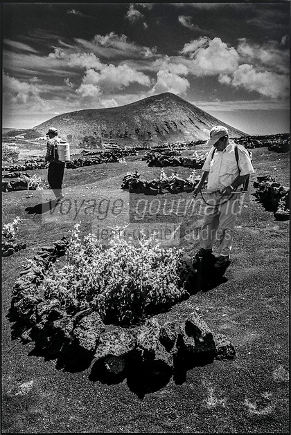 Europe, Espagne, Iles Canaries, Lanzarote:    Travail de la vigne dans la Geria // Europe, Spain, Canary Islands, Lanzarote: Vineyard work in Geria