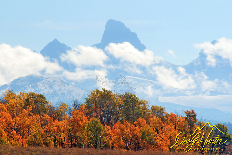 The Grand Tetons tower over Teton Valley during fall colors outside of Driggs Idaho.