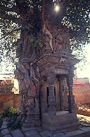 Temple in Pipal tree, Bhaktapur, Nepal.