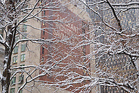 The former Emigrant Industrial Savings Bank Building at 49-51 Chambers Street in Lower Manhattan's Civic Center, Viewed thru snow covered trees in City Hall Park. New York City, New York State, USA.<br />