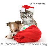 Kim, CHRISTMAS ANIMALS, photos, GBJBWP26238,#XA# stickers
