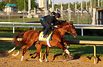 April 27, 2019 : Plus Que Parfait works out  at Churchill Downs, Louisville, Kentucky, preparing for a start in the Kentucky Derby. Owner Imperial Racing LLC, trainer Brendan P. Walsh. By Point of Entry x Belvedera (Awesome Again) Mary M. Meek/ESW/CSM