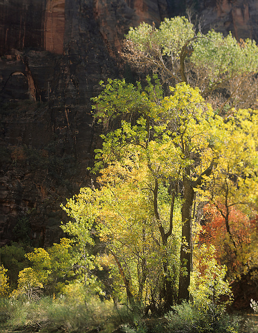 Autumn, Virgin River, Zion National Park, Utah